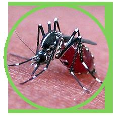 Thuốc diệt muỗi Permethrin 50ec và cách sử dụng đúng nhất