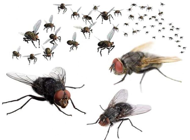 Một số mẹo diệt ruồi