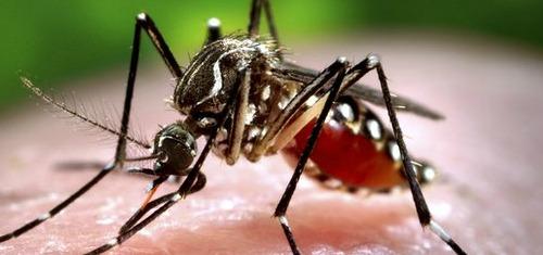 phun thuốc muỗi bao lâu thì được vào nhà
