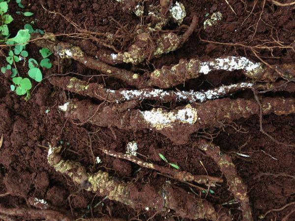 Thuốc diệt mối cho cây trồng an toàn hiệu quả