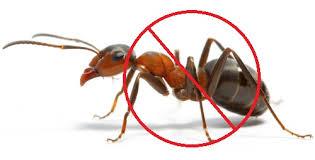 Bán thuốc diệt kiến tốt nhất tại Hà Nội