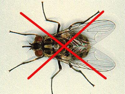 Thuốc diệt ruồi tốt nhất hiện nay tại Hà Nội