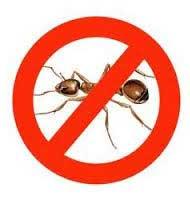 Mua thuốc diệt kiến ở đâu tốt tại Hà Nội