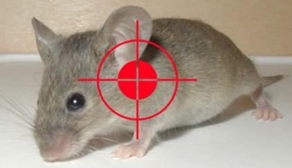 Cách sử dụng thuốc diệt chuột hiệu quả